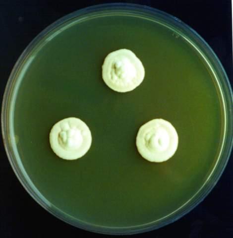 genetic engineering ethics essays